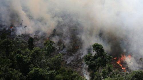 Incendios en el Amazonas causan indignación en redes sociales
